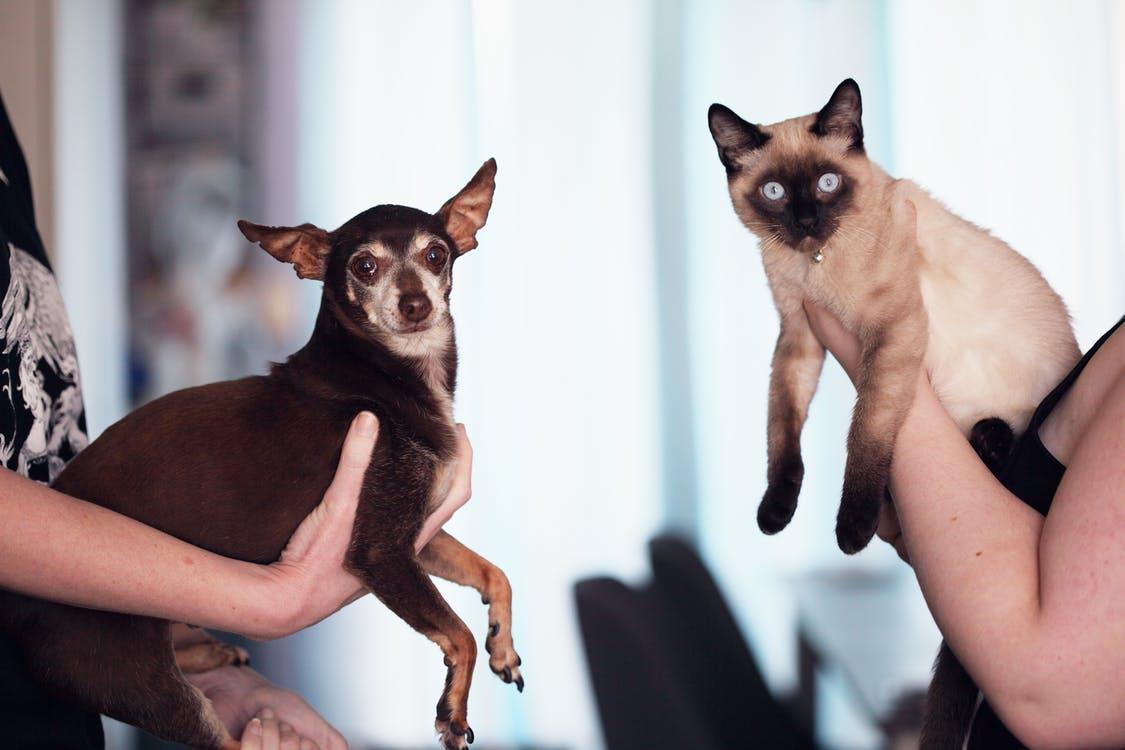 Kan du have kat og hund på samme tid?